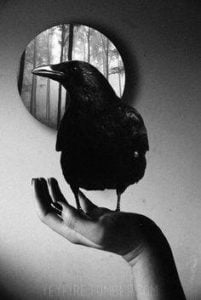 raven and mirror