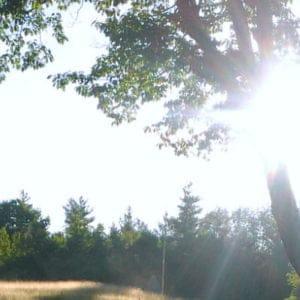 Sunshine through Branches